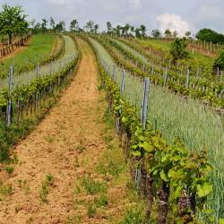 Eschenhof Weingärten